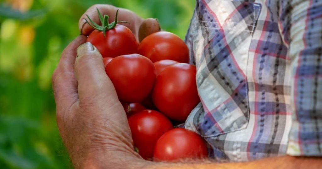 pestovanie ovocia a zeleniny